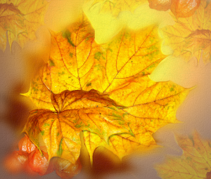 autumn Shirley in Pixabay